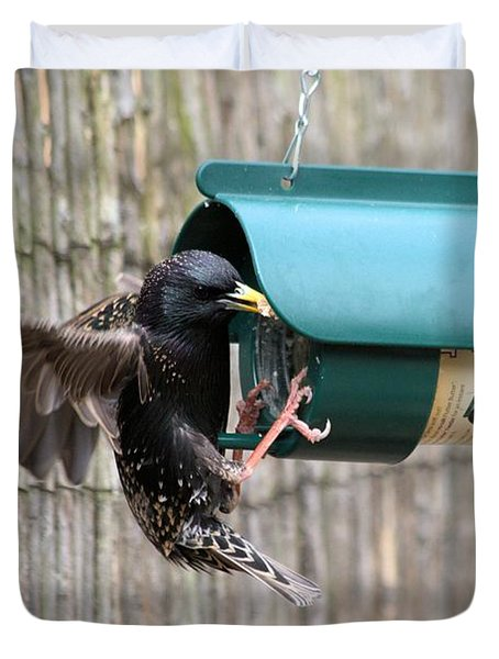 Starling On Bird Feeder Duvet Cover by Gordon Auld