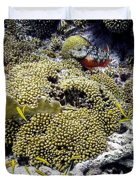 Stoplight Parrotfish And Yellow Chromis Duvet Cover