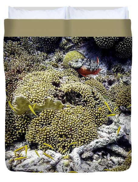Stoplight Parrotfish And Yellow Chromis Duvet Cover by Perla Copernik