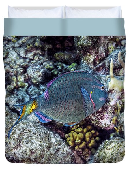 Stoplight Parrotfish Terminal Phase Duvet Cover by Perla Copernik