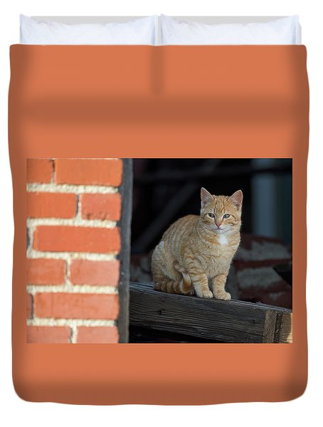 Street Cat Duvet Cover by Scott Warner