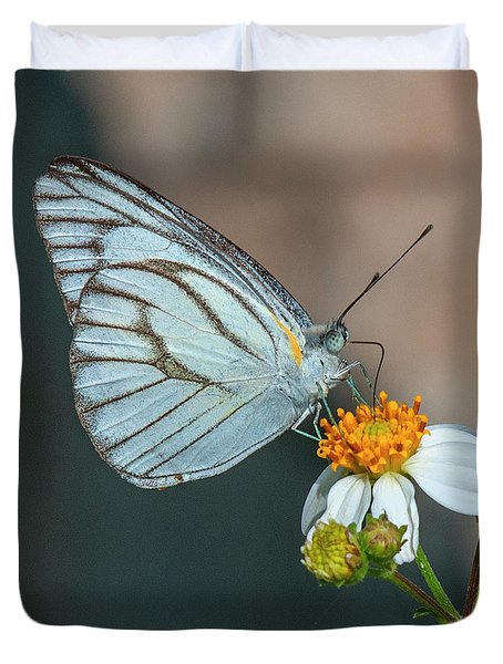Striped Albatross Butterfly Dthn0209 Duvet Cover