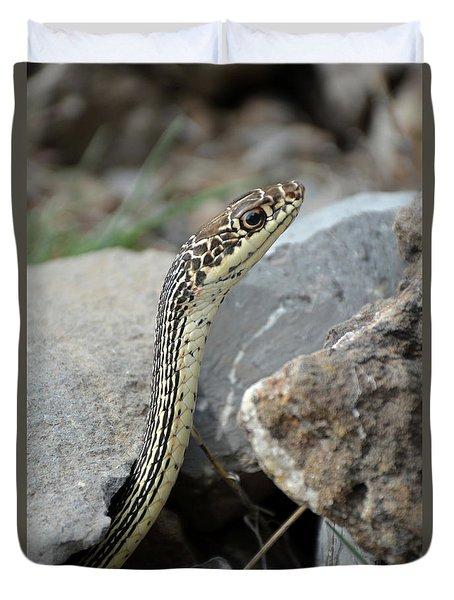 Striped Whipsnake, Masticophis Taeniatus Duvet Cover
