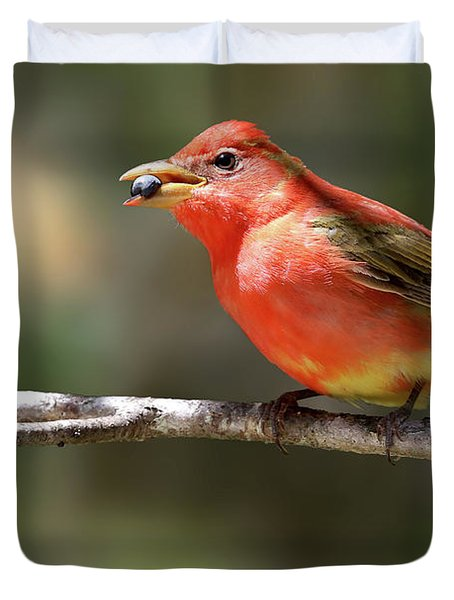 Stuffed Summer Tanager Duvet Cover
