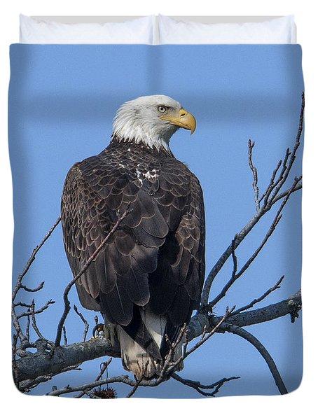 Subadult Bald Eagle Drb0254 Duvet Cover
