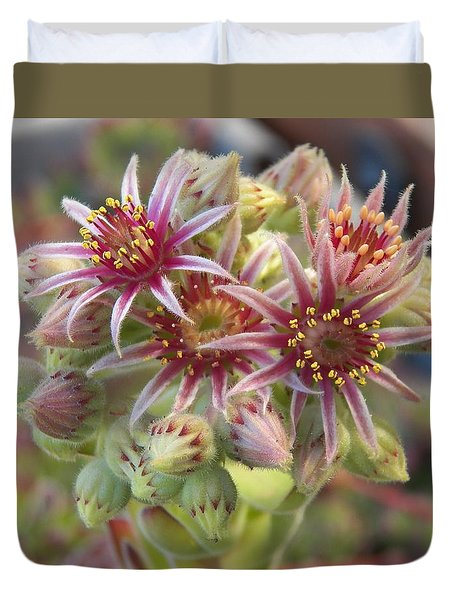 Succulent Cactus Duvet Cover by Laurie Kidd
