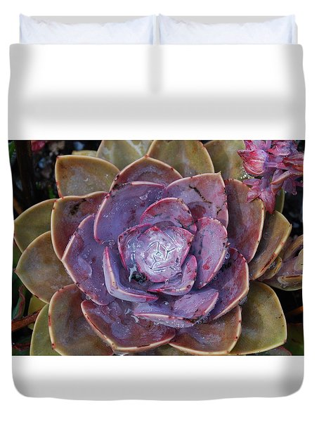 Succulent Star Duvet Cover
