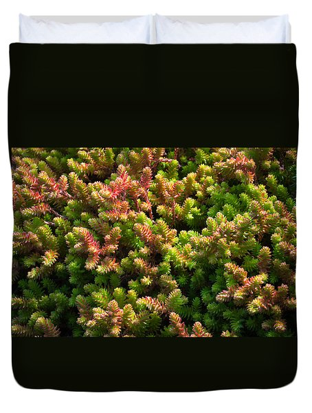 Duvet Cover featuring the photograph Succulents by Catherine Lau