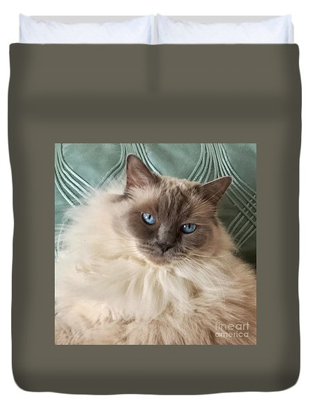 Sugar My Ragdoll Cat Duvet Cover
