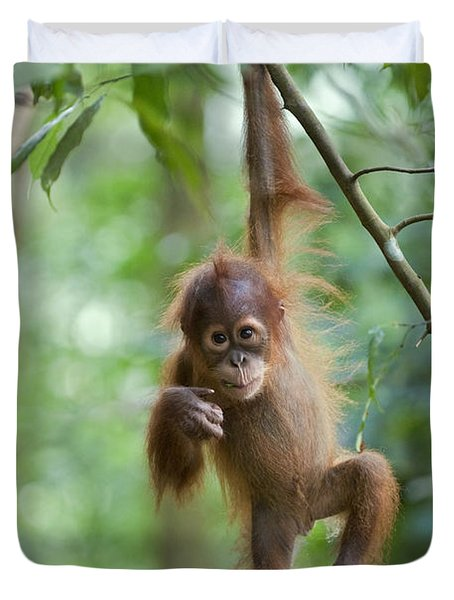 Duvet Cover featuring the photograph Sumatran Orangutan Pongo Abelii One by Suzi Eszterhas