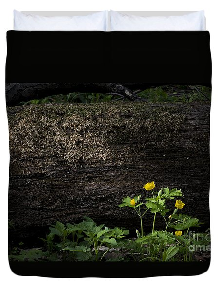 Duvet Cover featuring the photograph Sun Beam On Log by Andrea Silies