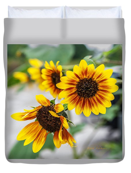 Sun Flowers In Bloom Duvet Cover by Edward Peterson