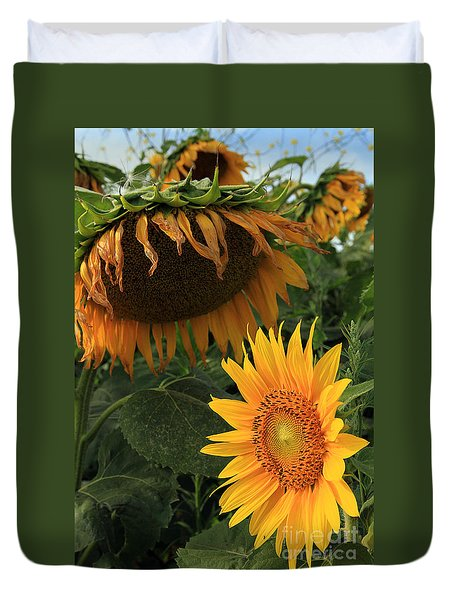 Sun Flowers  Past  And  Present  Duvet Cover