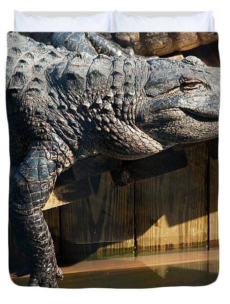 Sunbathing Gator Duvet Cover