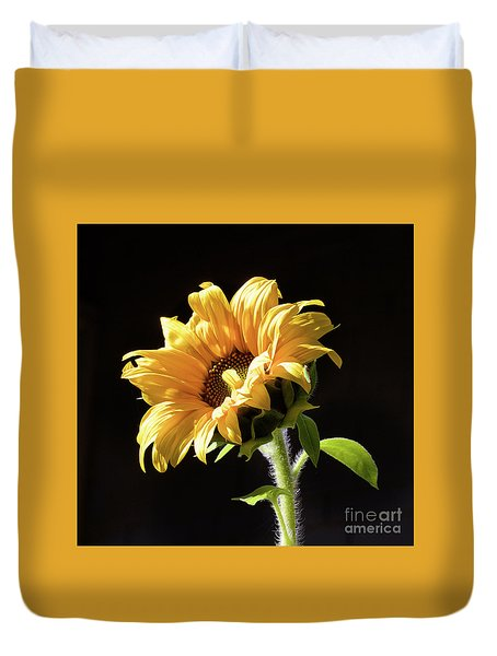 Sunflower Isloated On Black Duvet Cover