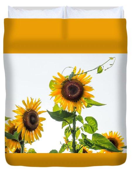 Sunflower With Vine Duvet Cover