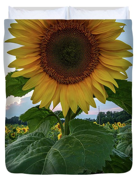 Sunflowers 3 Duvet Cover