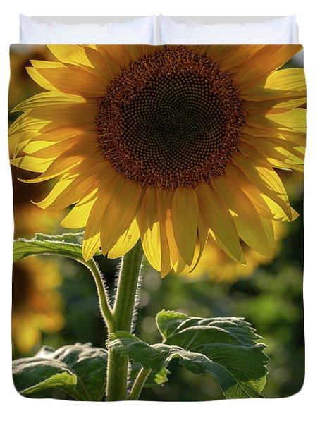 Sunflowers 9 Duvet Cover