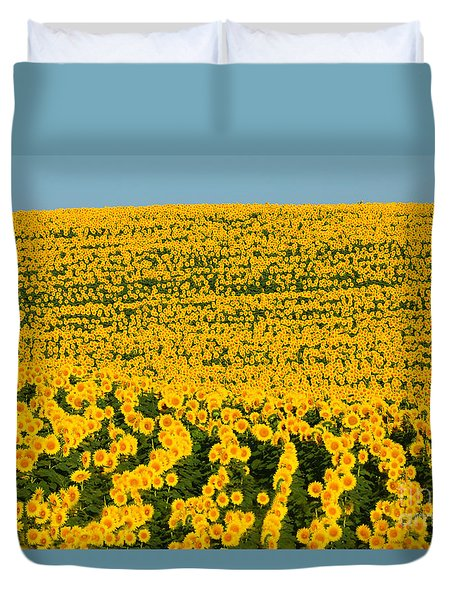 Sunflowers Galore Duvet Cover by Catherine Sherman
