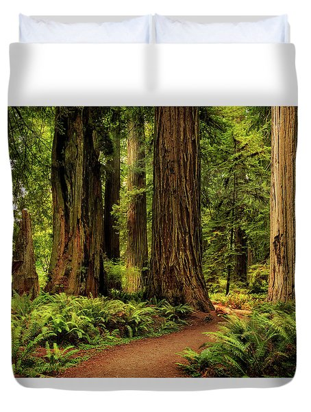 Duvet Cover featuring the photograph Sunlight In The Redwoods by James Eddy