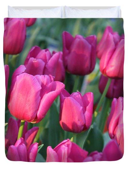 Sunlight On Pink Tulips Duvet Cover by Carol Groenen