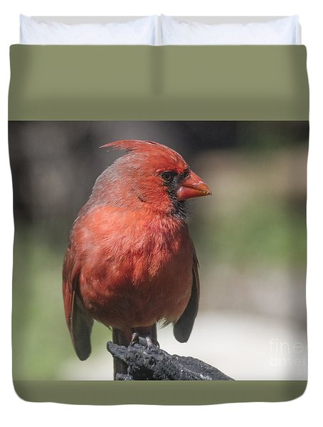 Sunlit Cardinal Duvet Cover