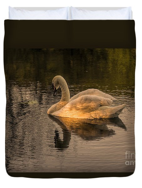 Sunlit Mute Swan  Duvet Cover by David  Hollingworth