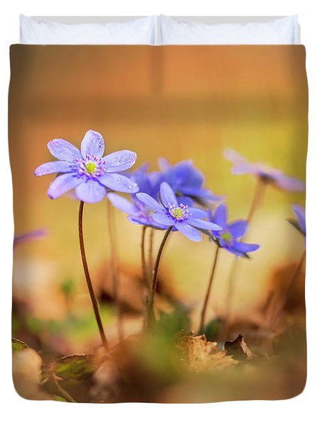 Duvet Cover featuring the photograph Sunny Afternoon With Liverworts by Jaroslaw Blaminsky
