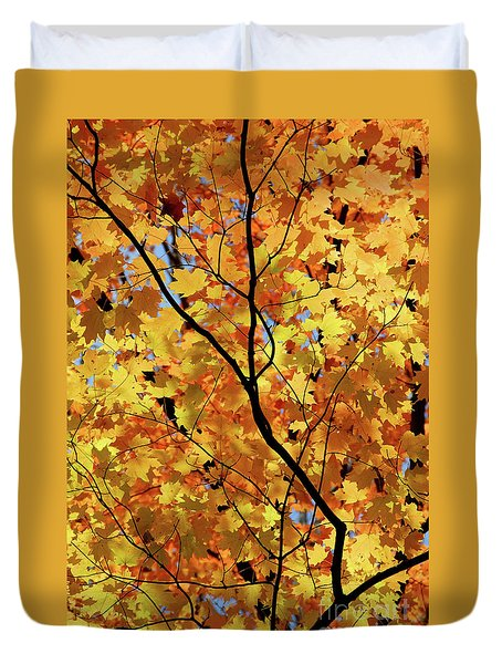 Duvet Cover featuring the photograph Sunshine In Maple Tree by Elena Elisseeva