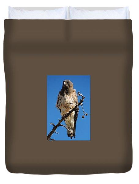 Swainson's Hawk Duvet Cover