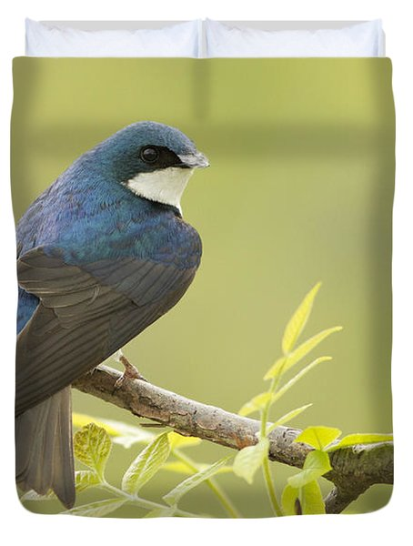 Swallow Duvet Cover by Mircea Costina Photography