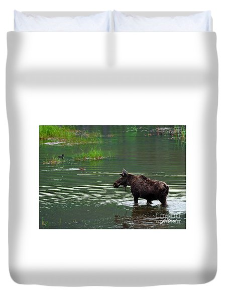 young Moose in spring pond Duvet Cover