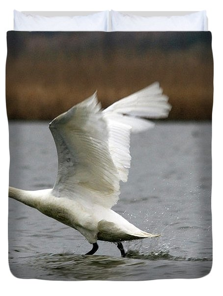 Swan During Take Off Duvet Cover
