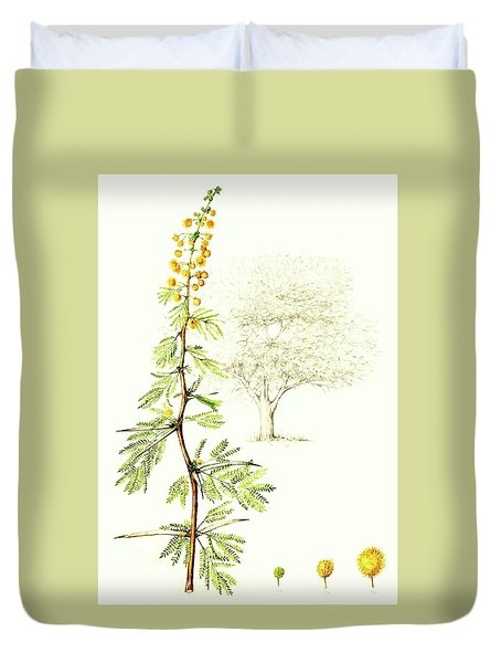 Duvet Cover featuring the painting Sweet Thorn Botanical Illustration by Heidi Kriel