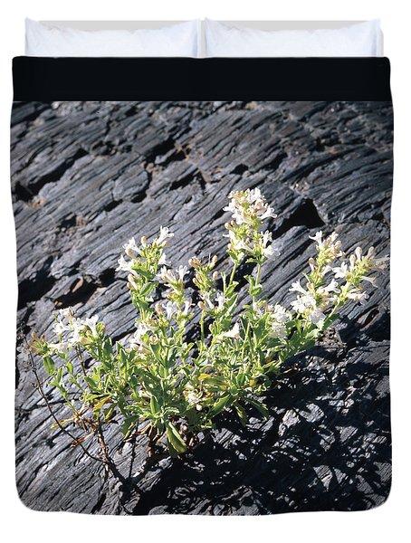 T-107709 Hot Rock Penstemon Duvet Cover