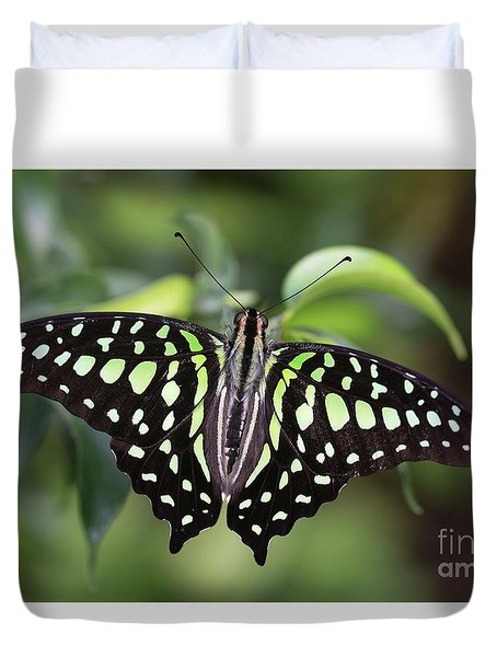Tailed Jay Duvet Cover