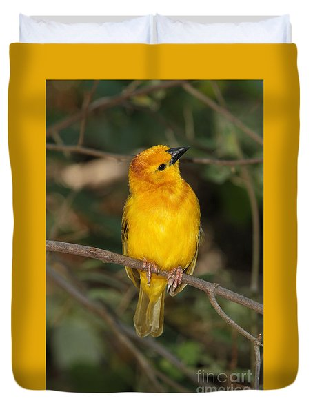 Taveta Golden Weaver Duvet Cover