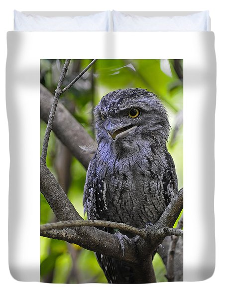 Tawny Frogmouth Duvet Cover