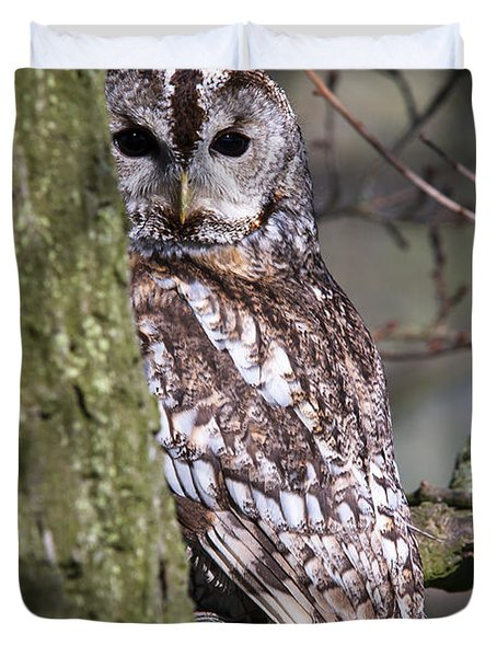 Tawny Owl In A Woodland Duvet Cover