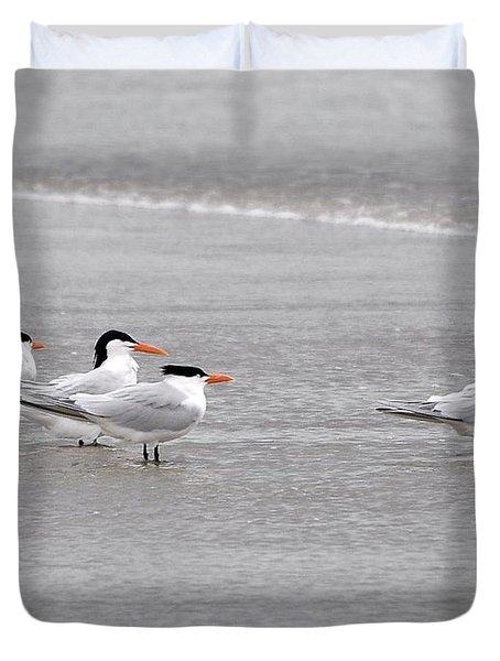 Terns Wading Duvet Cover by Al Powell Photography USA