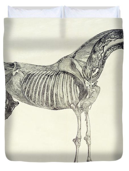 The Anatomy Of The Horse Duvet Cover by George Stubbs