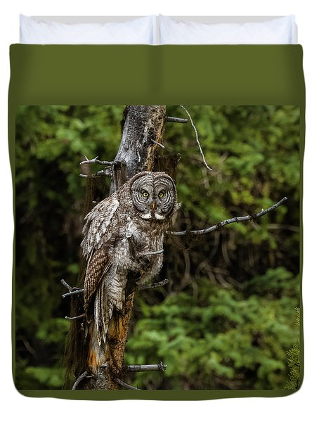 The Captivating Great Grey Owl Duvet Cover