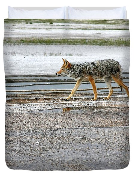 The Coyote - Dogs Are By Far More Dangerous Duvet Cover by Christine Till