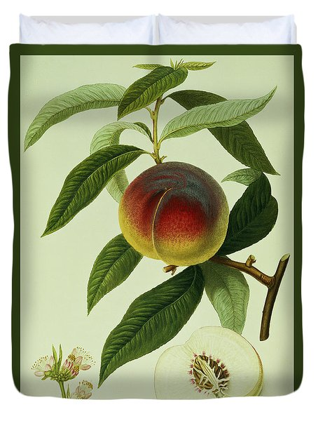 The Galande Peach Duvet Cover by William Hooker