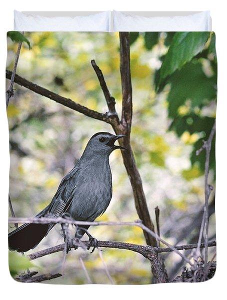 The Gray Catbird Meowing Duvet Cover