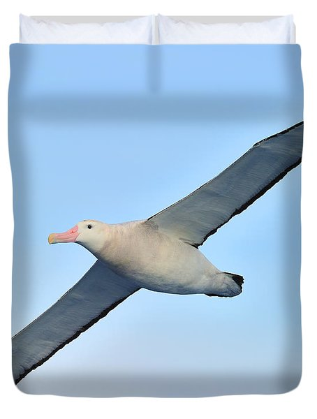 The Greatest Seabird Duvet Cover by Tony Beck