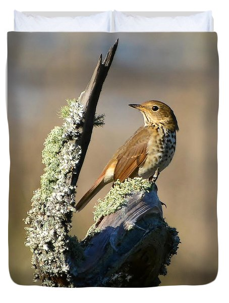 The Hermit Thrush Duvet Cover by Kathy Baccari