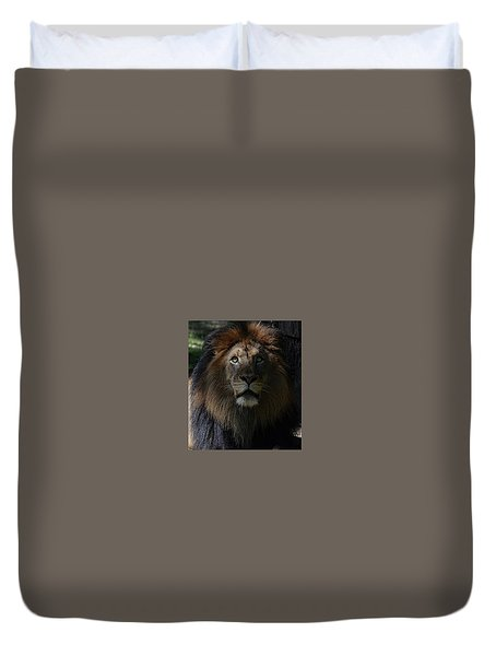 The King In Awe Duvet Cover by Ronda Ryan