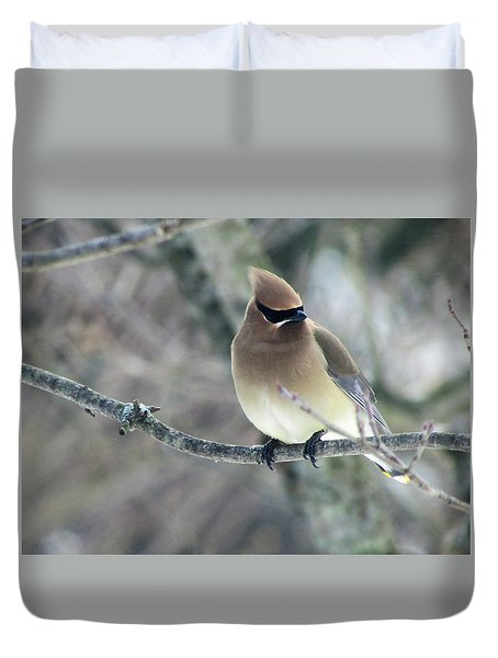 The Masked Cedar Waxwing Duvet Cover