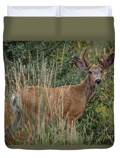 The Mule Deer Buck Duvet Cover